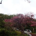 沖縄ダイビング☆1/28 ビーチFUN りょうけん&えりな