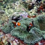 沖縄ダイビング☆2/18 珊瑚体験ダイビング りょうけん・しおん・えりな・ゆうり・とも