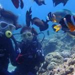 沖縄ダイビング★5/18 サンゴ体験ダイビング 10時半 りょうけん