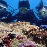 沖縄ダイビング☆5/5 特上!サンゴ体験ダイビング 10時半 ゆうき・えりな