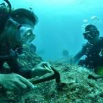 沖縄ダイビング☆5/27 サンゴ植え付けダイビング とも