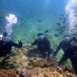 沖縄ダイビング☆2/28 サンゴのお花畑体験ダイビング 10:30 しおん・えりな