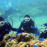 沖縄ダイビング☆4/17 サンゴのお花畑体験ダイビング 13:00 ゆうき・しおん