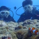 沖縄ダイビング☆4/19 珊瑚 体験ダイビング しおん