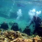 沖縄ダイビング☆ 4/30 珊瑚体験ダイビング 10時~ シオン トヨ