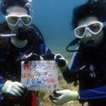 沖縄ダイビング☆7/29 砂辺 ビーチFUN&OWラスト なすび