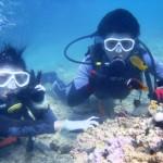 沖縄ダイビング☆8/31 珊瑚礁体験ダイビング 9:00 しおん