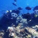 沖縄ダイビング☆ 10/27 青の洞窟体験ダイビング 8時~ えりな
