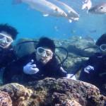 沖縄ダイビング☆12/30 珊瑚体験ダイビング 13:00 しおん