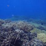 沖縄ダイビング☆3/1 珊瑚礁体験ダイビング 14:00 なすび