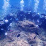 沖縄ダイビング☆3/10  珊瑚礁体験ダイビング 11:00 えりな・しおん・りさ
