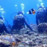 沖縄ダイビング☆3/20  青の洞窟体験ダイビング 10:30~ えりな・しおん