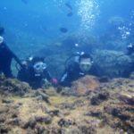 沖縄ダイビング☆ 3/22    珊瑚体験ダイビング 15:00~  しおん・なすび