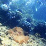 沖縄ダイビング☆3/28  珊瑚礁体験ダイビング 10:00  たく・なすび・ゆうき