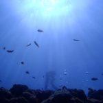 沖縄ダイビング☆4/28 ケラマボートFUN えりな