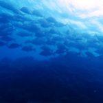 沖縄ダイビング☆6/22 セラガキFUN タク