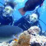 沖縄ダイビング☆6/29 青の洞窟体験ダイビング 8時 しおん