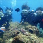 沖縄ダイビング☆8/12  珊瑚のお花畑体験ダイビング 10:30~ せいや・とも