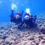 沖縄ダイビング☆8/24  青の洞窟体験ダイビング  8時~  なすび