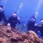 沖縄ダイビング☆9/20  青の洞窟体験ダイビング  10:30~ しおん・ドラ