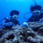 沖縄ダイビング☆ 10/10 8時~ 珊瑚体験ダイビング しおん