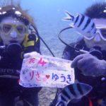 沖縄ダイビング☆ 10/11 15時~ 珊瑚体験ダイビング なすび