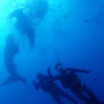沖縄ダイビング☆ 10/16 ビーチ+ジンベイFUN たく