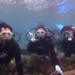 沖縄ダイビング☆11/13  サンゴ礁体験ダイビング  9:00~ なすび