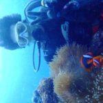 沖縄ダイビング☆11/22  サンゴ礁体験ダイビング 10:30~ なすび