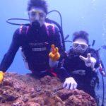 沖縄ダイビング☆ 12/29 珊瑚体験ダイビング 11時~ しおん