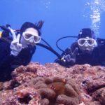沖縄ダイビング☆12/31  サンゴ礁体験ダイビング  11:00~  しおん