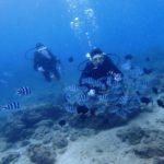 沖縄ダイビング☆1/3  砂辺ビーチFUNダイビング  なすび
