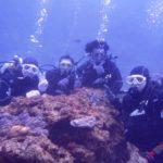 沖縄ダイビング☆1/7  サンゴ礁 体験ダイビング  11:30~ しおん・なすび
