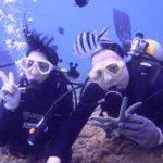 沖縄ダイビング☆2/23  珊瑚のお花畑体験ダイビング 14:00~ なすび