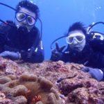 沖縄ダイビング☆2/8 サンゴ礁体験ダイビング 10:30~ しおん