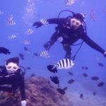 沖縄ダイビング☆2/26  珊瑚のお花畑体験ダイビング  8:00~ なすび
