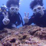 沖縄ダイビング☆4/21 珊瑚体験ダイビング 8:00~ なすび