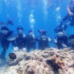沖縄ダイビング☆ 5/31 青の洞窟体験ダイビング 10時~ しおん・たく・とも