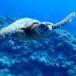 沖縄ダイビング☆7/28 FUNボートダイビング ケラマ たく