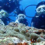 沖縄ダイビング☆7/28 サンゴ礁体験ダイビング 15:30~ しおん・とも