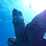 沖縄ダイビング☆8/18 FUNボートダイビング 慶良間 なすび