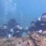 沖縄ダイビング☆8/12 サンゴ礁体験ダイビング 13:00~ しおん・たく