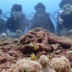 沖縄ダイビング☆9/11  珊瑚礁体験ダイビング  10:30~ とも・えりな