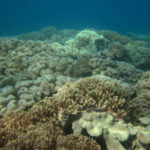 沖縄ダイビング☆9/26 サンゴ礁体験ダイビング 8時~ 新庄