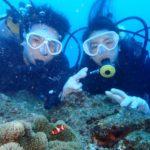 沖縄ダイビング☆11/3 15時 サンゴ礁体験ダイビング しおん