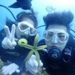 沖縄ダイビング☆11/5  サンゴ礁体験ダイビング 13:00~ どら