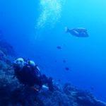 沖縄ダイビング☆ 11/12 サンゴ礁体験ダイビング 10:00 とも