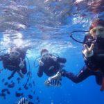 沖縄ダイビング☆11/16 サンゴ礁体験ダイビング 10時半~ なすび