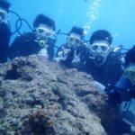 沖縄ダイビング☆ 11/24 サンゴ体験ダイビング 15:00~ たく・しおん
