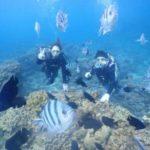 沖縄ダイビング☆1/19 サンゴ礁体験ダイビング 14:30~ ドラ